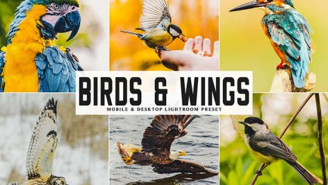 دانلود پریست لایت روم و Camera Raw و اکشن: Birds Wings Mobile Desktop Lightroom Presets
